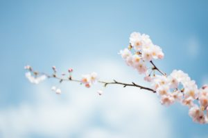 Health tips for spring and how to adapt to the season